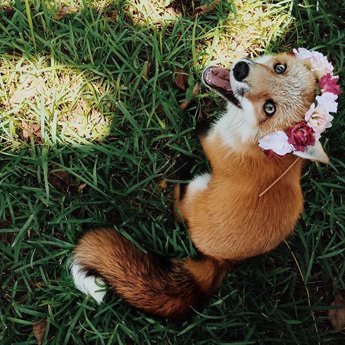 Tình yêu kỳ lạ của cáo và chó - ảnh 10
