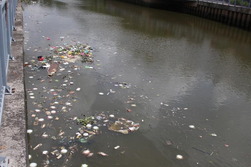 Cá lóp ngóp nổi lên hớp không khí trên kênh Nhiêu Lộc - ảnh 3