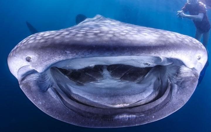 Khoảnh khắc thú vị: Hải cẩu tạo dáng,