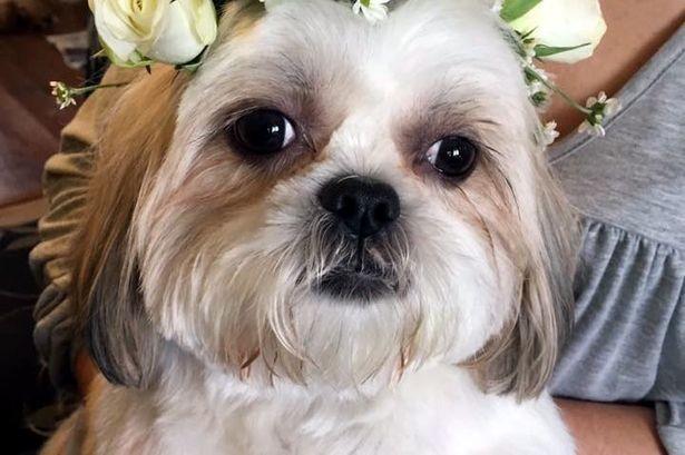 Chi 2.000 bảng Anh để làm đám cưới cho cún cưng - ảnh 6