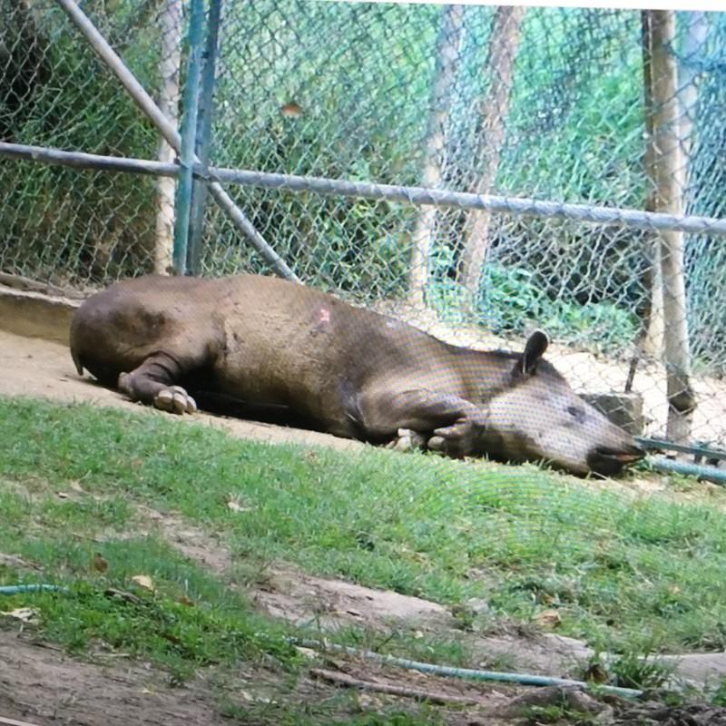 Ảnh: Động vật ở vườn thú Venezuela đói còn 'da bọc xương' - ảnh 6