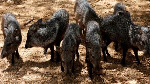 Ảnh: Động vật ở vườn thú Venezuela đói còn 'da bọc xương' - ảnh 3