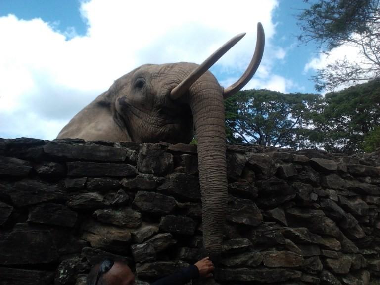 Ảnh: Động vật ở vườn thú Venezuela đói còn 'da bọc xương' - ảnh 5