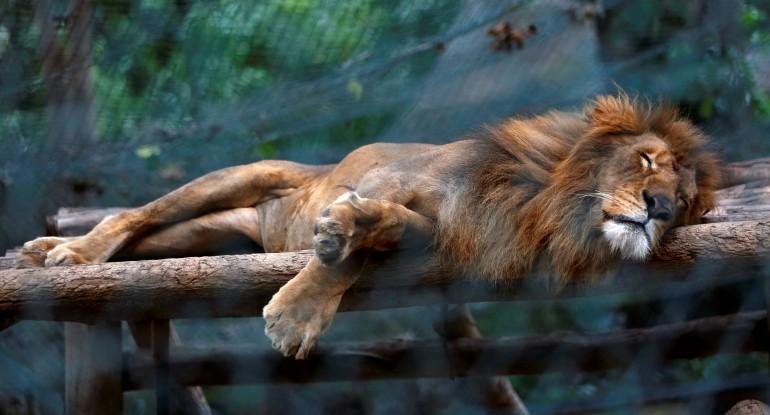 Ảnh: Động vật ở vườn thú Venezuela đói còn 'da bọc xương' - ảnh 8