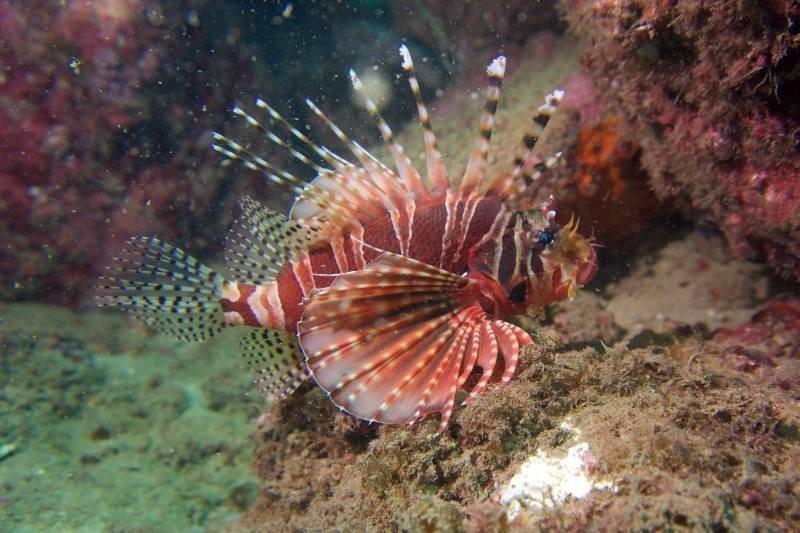 Biển Cù Lao Chàm tuyệt đẹp dưới ống kính du khách - ảnh 12