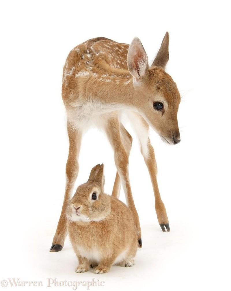 Những cặp 'song sinh' khác giống cực đáng yêu - ảnh 11