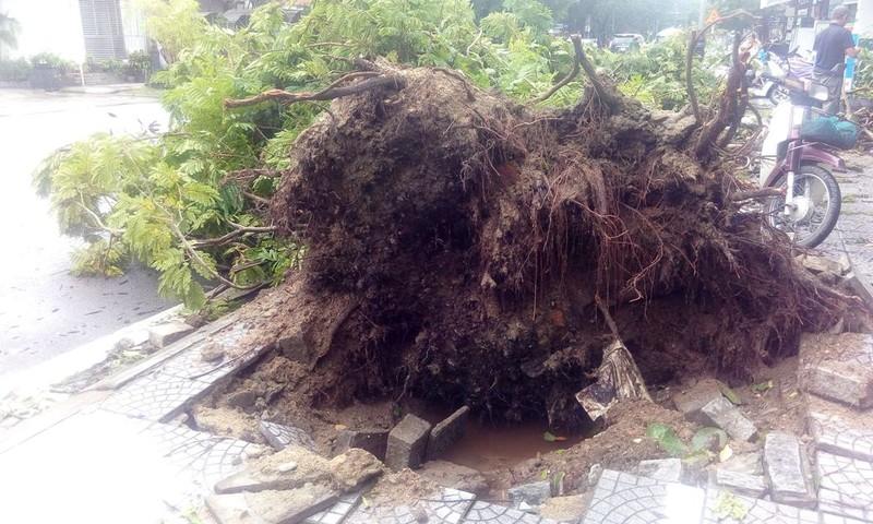 Hàng loạt cây xanh ở Huế bị quật gãy trong đêm - ảnh 4