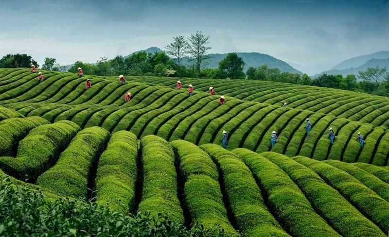 Việt Nam lọt top ảnh đẹp du lịch thế giới - ảnh 2