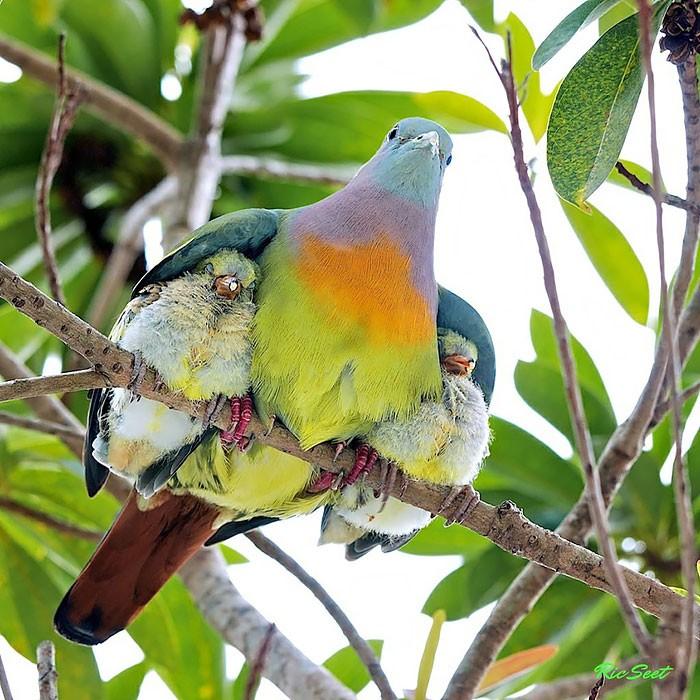 Muôn kiểu bảo bọc con của các loài chim trên thế giới - ảnh 9