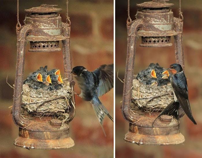Muôn kiểu bảo bọc con của các loài chim trên thế giới - ảnh 2