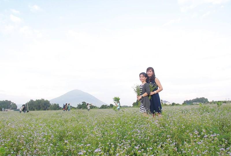Bất ngờ với đồng hoa dại giữa lòng TP Tây Ninh - ảnh 3