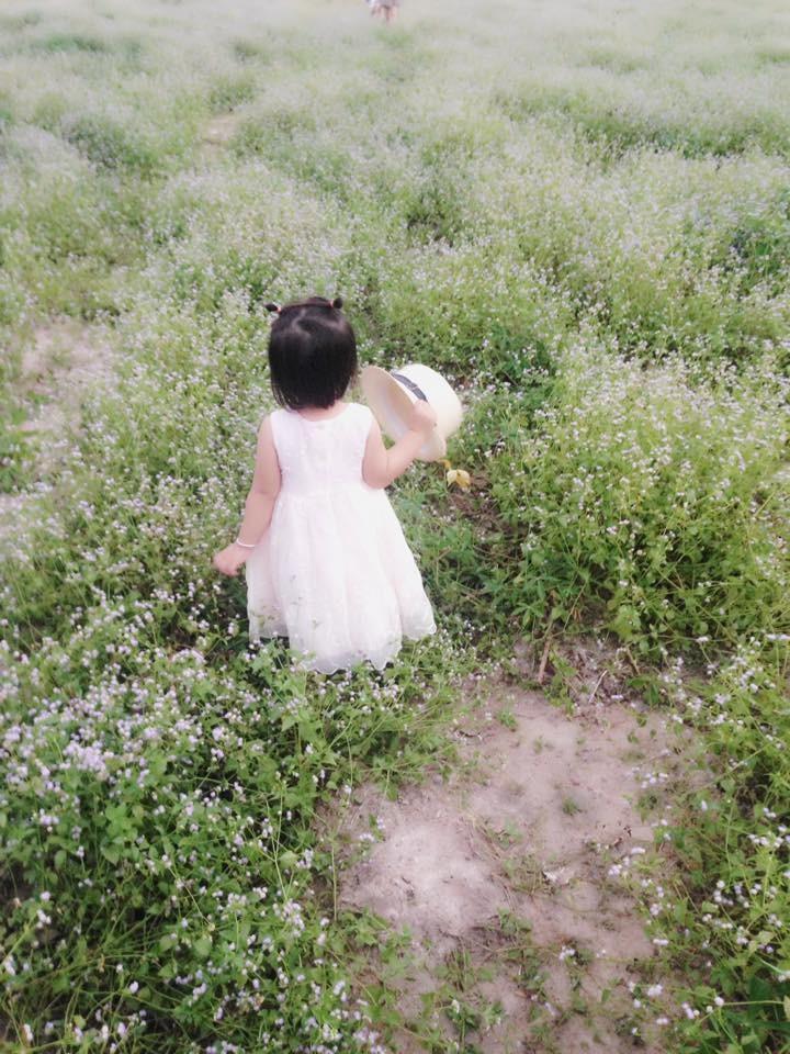 Bất ngờ với đồng hoa dại giữa lòng TP Tây Ninh - ảnh 5