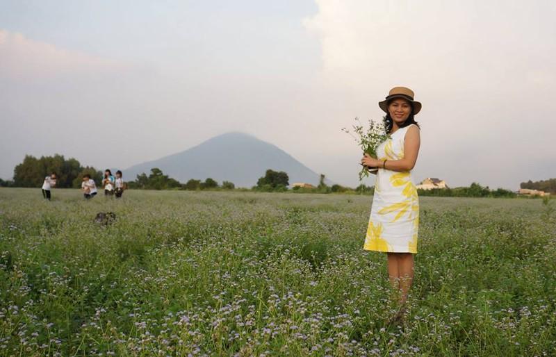 Bất ngờ với đồng hoa dại giữa lòng TP Tây Ninh - ảnh 7