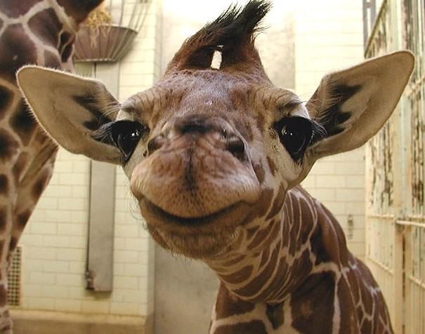 Những động vật hạnh phúc nhất trên thế giới - ảnh 2