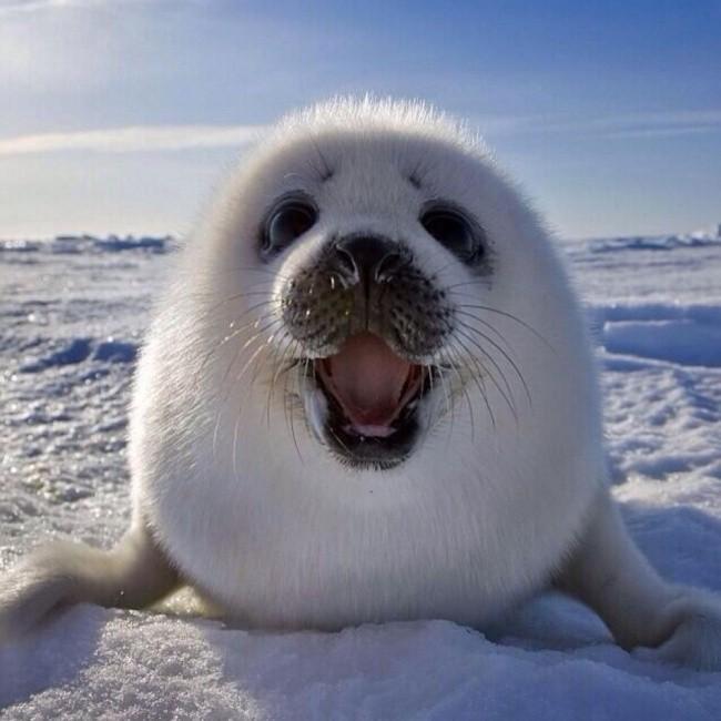 Những động vật hạnh phúc nhất trên thế giới - ảnh 4