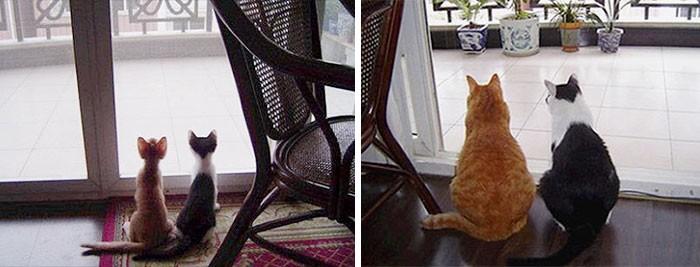 Thích thú với những cặp đôi thú cưng lớn lên cùng nhau - ảnh 3
