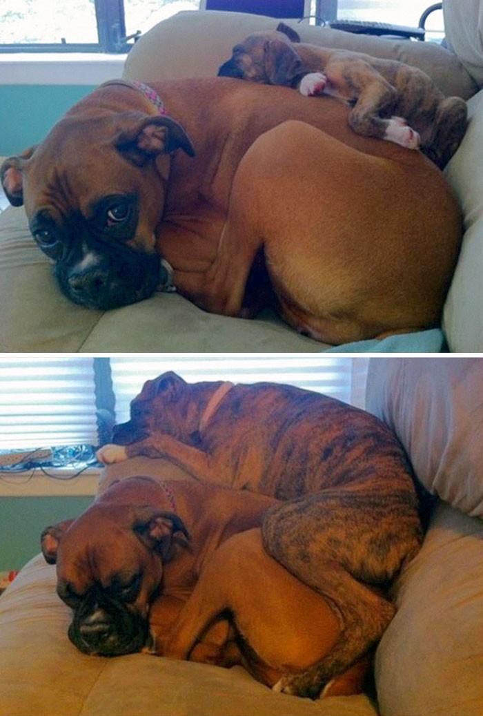 Thích thú với những cặp đôi thú cưng lớn lên cùng nhau - ảnh 1