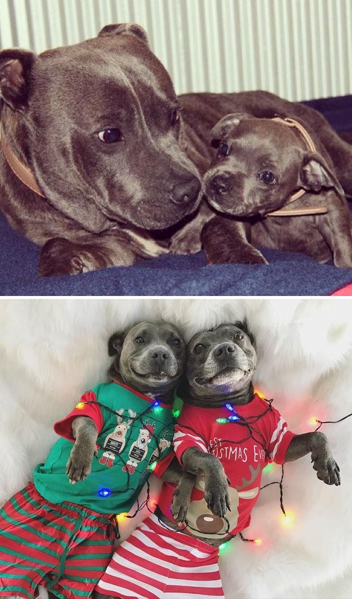Thích thú với những cặp đôi thú cưng lớn lên cùng nhau - ảnh 8