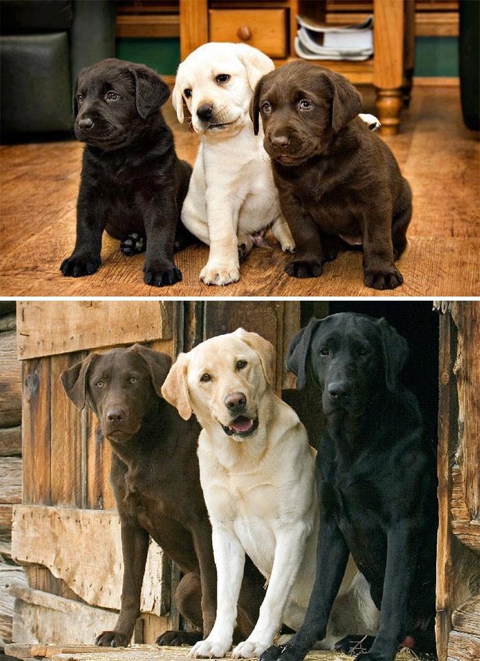 Thích thú với những cặp đôi thú cưng lớn lên cùng nhau - ảnh 12