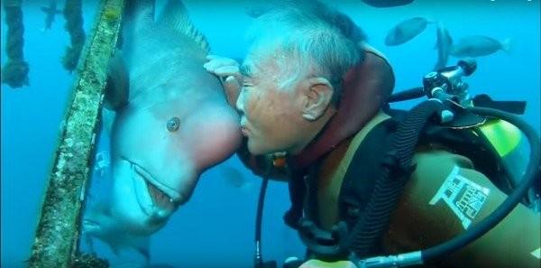Tình bạn 25 năm của người và cá - ảnh 2