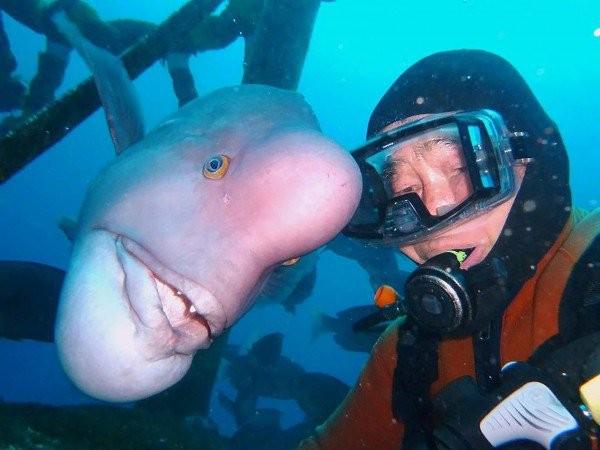 Tình bạn 25 năm của người và cá - ảnh 1
