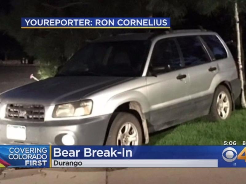 Gấu đột nhập xe hơi rồi... lái một vòng quanh phố - ảnh 1