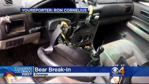 Gấu đột nhập xe hơi rồi... lái một vòng quanh phố - ảnh 2
