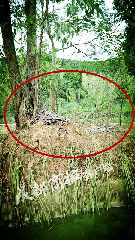 78 cá sấu tẩu thoát, thành phố Trung Quốc náo loạn - ảnh 1
