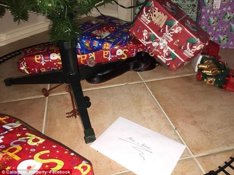 Kinh hoàng phát hiện rắn độc trong đống quà Giáng sinh - ảnh 1