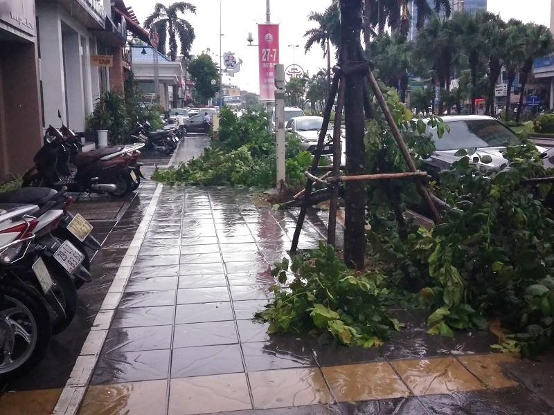 Cây mới trồng trên đường Nguyễn Chí Thanh đua nhau bật gốc sau bão - ảnh 3