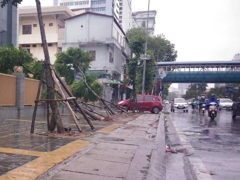 Cây mới trồng trên đường Nguyễn Chí Thanh đua nhau bật gốc sau bão - ảnh 5