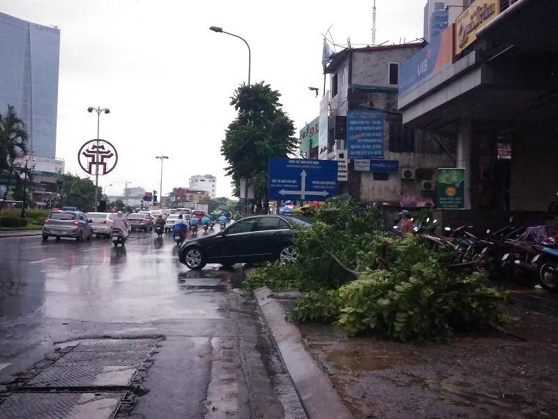 Cây mới trồng trên đường Nguyễn Chí Thanh đua nhau bật gốc sau bão - ảnh 6