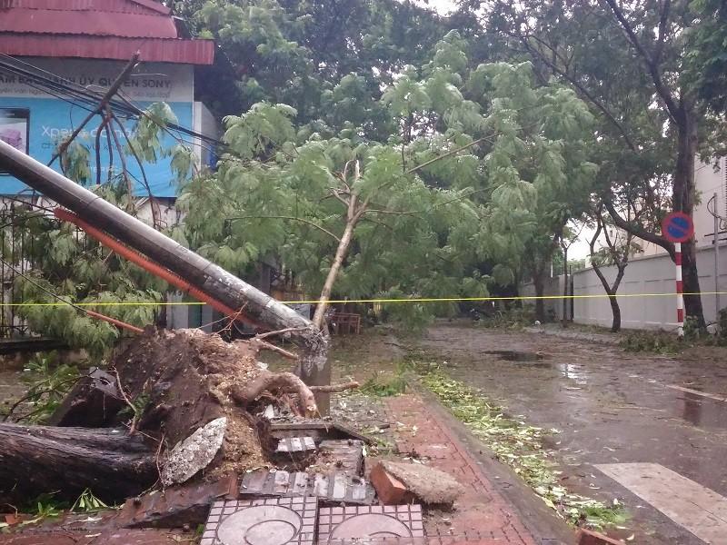 Cây mới trồng trên đường Nguyễn Chí Thanh đua nhau bật gốc sau bão - ảnh 8