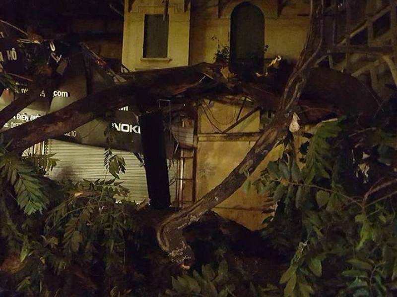 Hà Nội: Cây lớn bất ngờ đổ sập cửa hàng điện thoại - ảnh 2