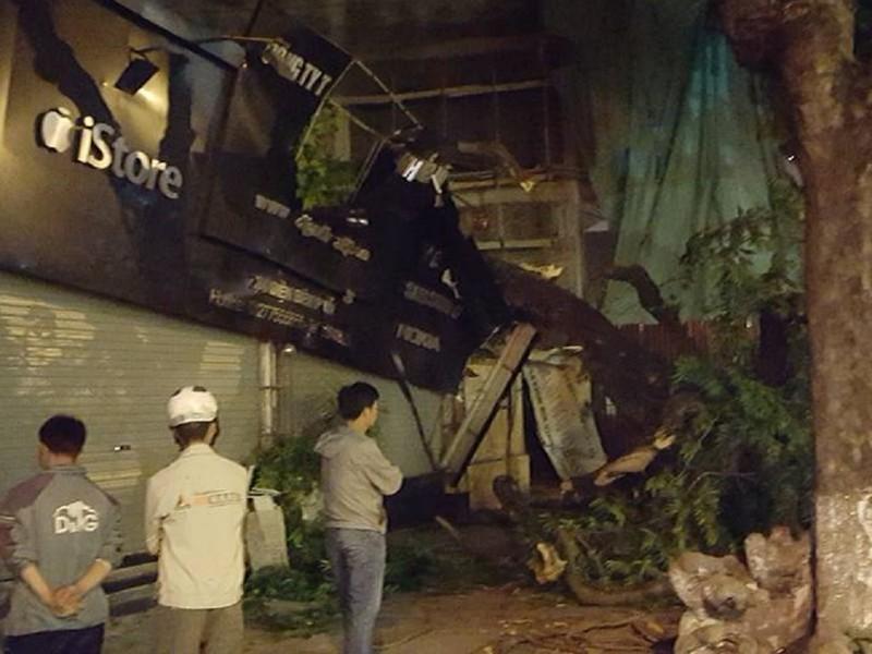 Hà Nội: Cây lớn bất ngờ đổ sập cửa hàng điện thoại - ảnh 1