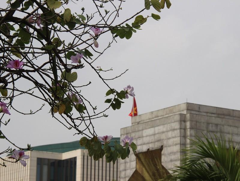Thiếu nữ Hà thành đẹp mê mẩn bên hoa ban Tây Bắc - ảnh 5