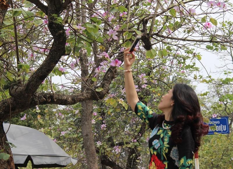 Thiếu nữ Hà thành đẹp mê mẩn bên hoa ban Tây Bắc - ảnh 6