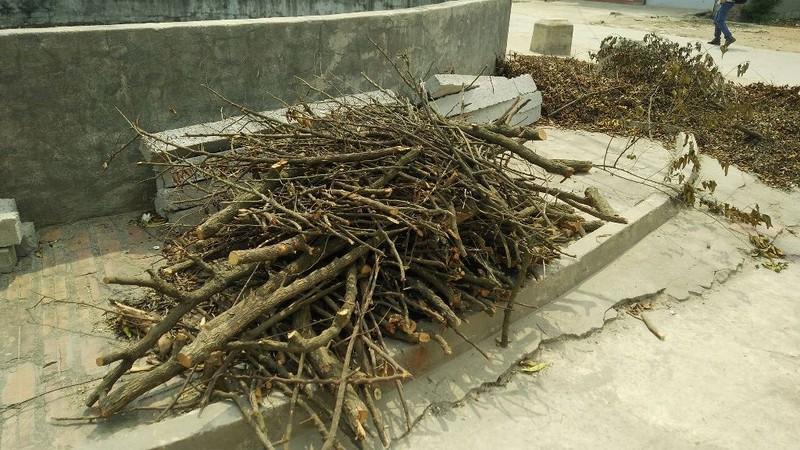 Chặt cả trăm cây xanh để dẹp vỉa hè - ảnh 5