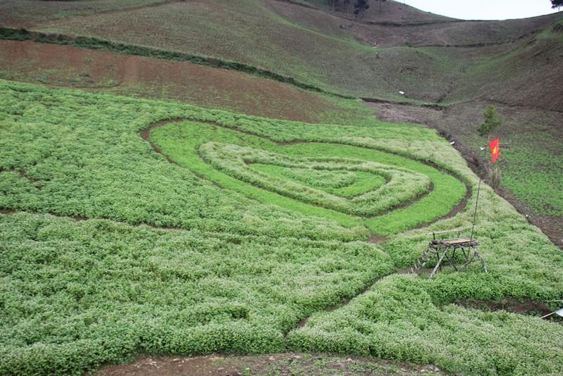 Say lòng hoa tam giác mạch cuối mùa xứ Tây Bắc - ảnh 14