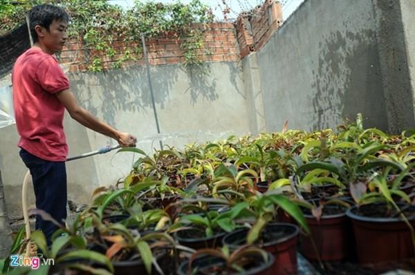 Tận thấy thú chơi 'cây ăn thịt' ở Sài Gòn - ảnh 2