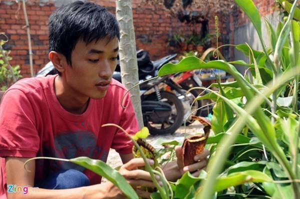 Tận thấy thú chơi 'cây ăn thịt' ở Sài Gòn - ảnh 9