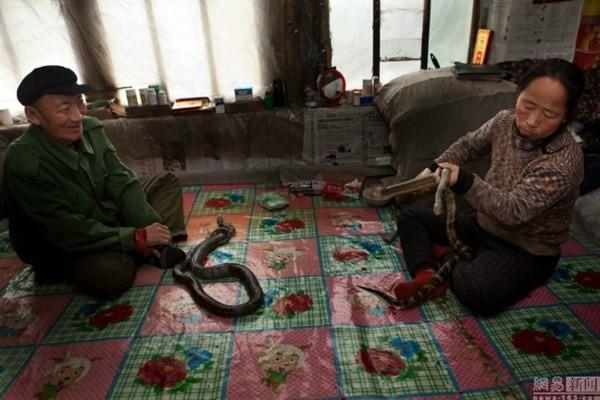 Nuôi hơn 20 con rắn trong nhà 'làm bạn' suốt 30 năm - ảnh 8