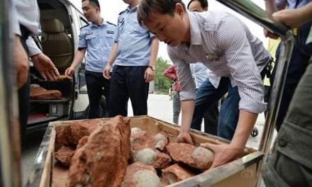 Trung Quốc: Phát hiện hàng chục quả trứng khủng long dưới nền đường - ảnh 1