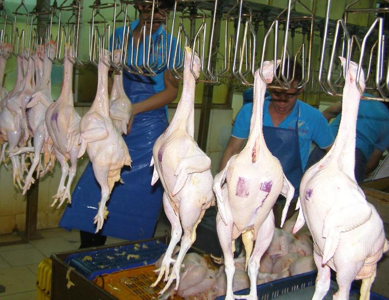 Kinh doanh thịt gia cầm không dấu kiểm soát giết mổ - ảnh 1