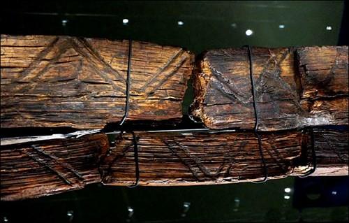 Bí ẩn tượng gỗ 11 vạn năm không mục nát - ảnh 8