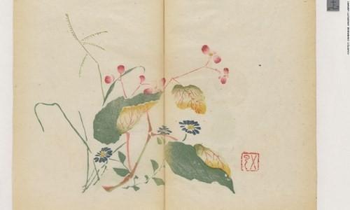 Cổ thư in màu vẹn nguyên kỳ lạ suốt 300 năm - ảnh 10
