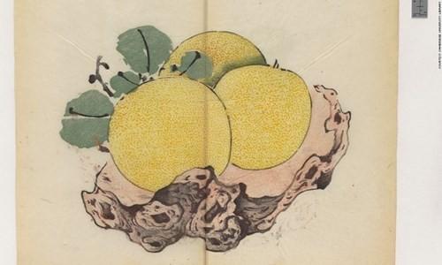 Cổ thư in màu vẹn nguyên kỳ lạ suốt 300 năm - ảnh 12