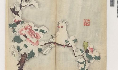 Cổ thư in màu vẹn nguyên kỳ lạ suốt 300 năm - ảnh 1