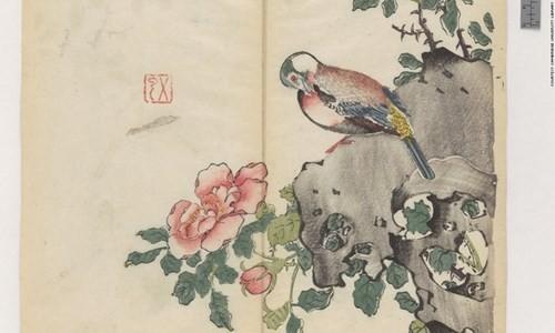 Cổ thư in màu vẹn nguyên kỳ lạ suốt 300 năm - ảnh 2