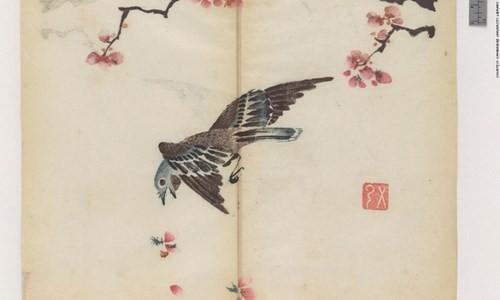 Cổ thư in màu vẹn nguyên kỳ lạ suốt 300 năm - ảnh 3